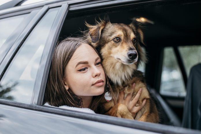niños y mascotas en un carro