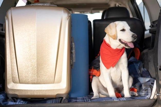 seguridad del perro en el coche