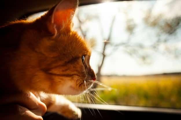 vacaciones con mascotas en el coche