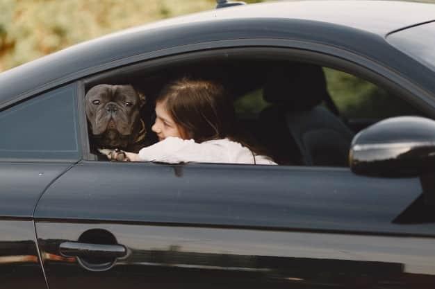 viaje con niños y mascotas